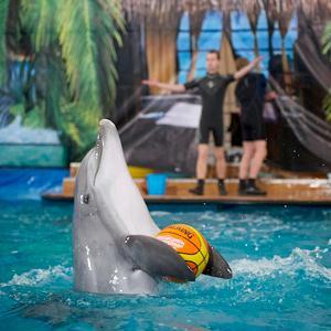 Дельфинарии, океанариумы Большого Камня