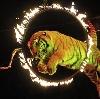 Цирки в Большом Камне
