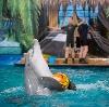 Дельфинарии, океанариумы в Большом Камне
